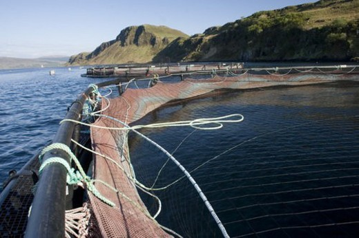 Salmon fish farm.  Hebrides, Scotland. : Stock Photo