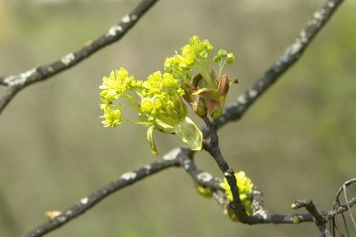 beautiful, berne, blumenpracht, blurred, buds, burgdorf, chlorophyll : Stock Photo