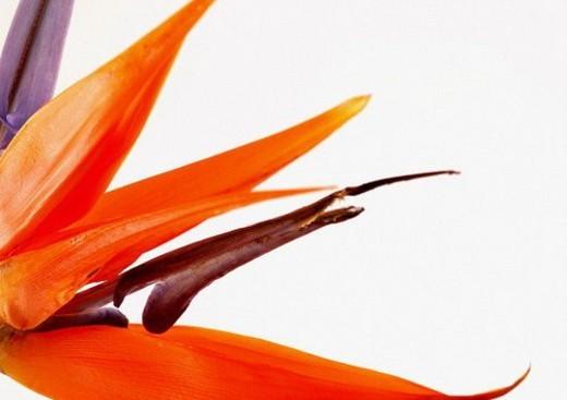 Stock Photo: 4029R-147968 flower story, grown, flora, vegetation, blossom, nature
