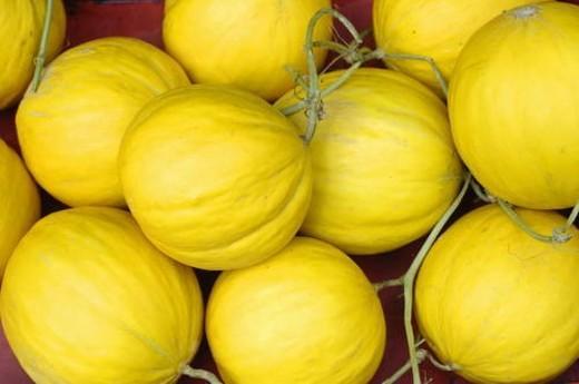 Stock Photo: 4029R-148985 Close-up of squash fruits