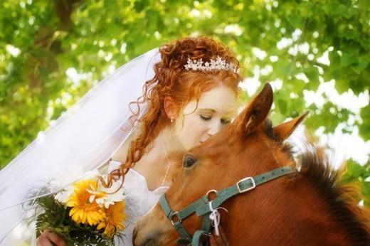 Bride kisses a horse : Stock Photo