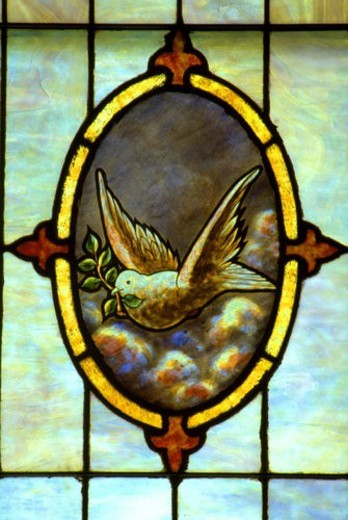 Holy Communion Church stained glass of dove flying with olive branch : Stock Photo