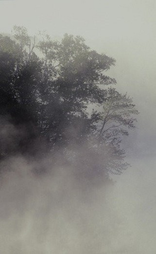 Stock Photo: 4029R-153948 Tree shrouded in fog