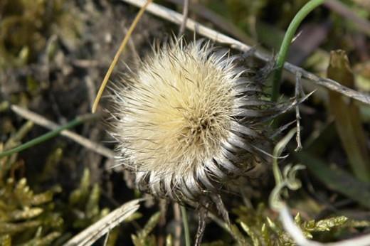 Stock Photo: 4029R-155707 felder, wiesen, stich, spitzig, berne, blooms, blumenrfarben