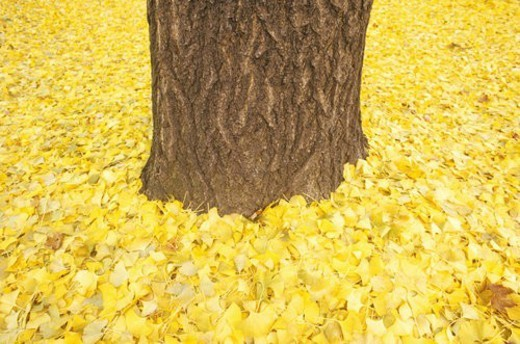 Autumn leaves around trunk of tree : Stock Photo