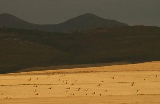 Stock Photo: 4029R-156380 Coastal Landscape - South Africa