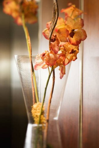 Still life shot of orange orchid in vase with selective focus. : Stock Photo