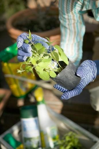 Stock Photo: 4029R-157717 Gardening