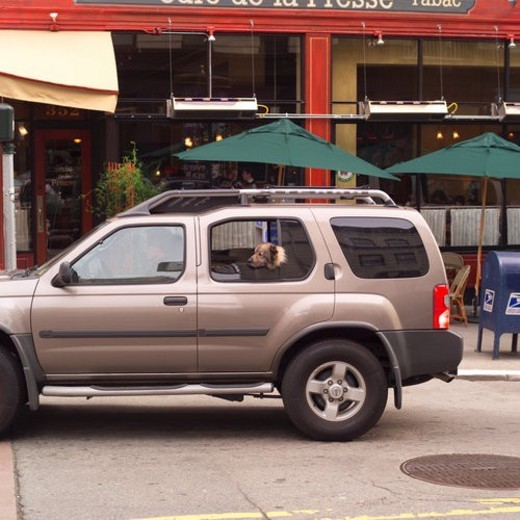 Stock Photo: 4029R-159691 Dog in SUV San Francisco