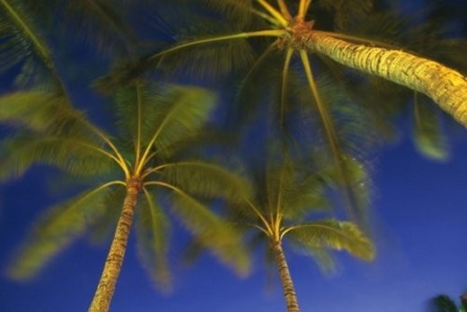 Palm Trees Against the Night Sky, Low Angle View, Blurred Motion : Stock Photo
