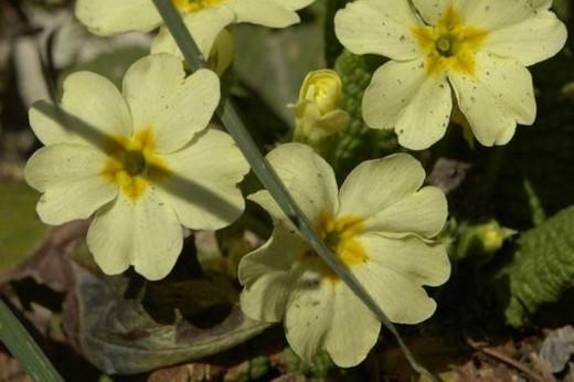 Stock Photo: 4029R-166670 wiesen, felder, berne, blooms, botany, colored