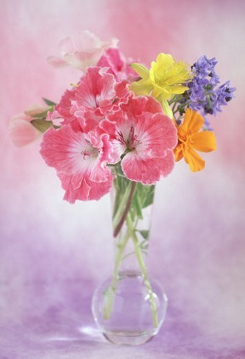Stock Photo: 4029R-173501 View of beautiful flowers in vase