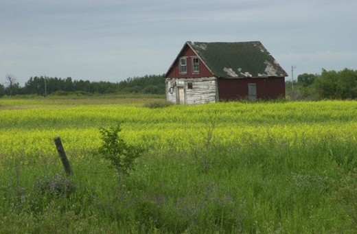 Manitoba Prairie Scenes : Stock Photo