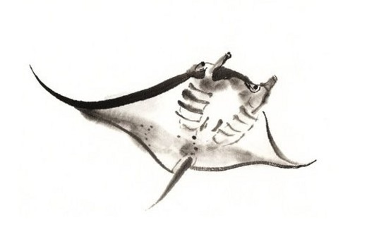 Manta, Ink Brush Painting : Stock Photo