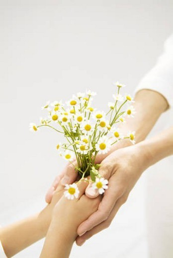 Child giving adult bouquet of daisies : Stock Photo