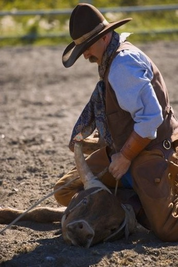 Steer wrestling : Stock Photo