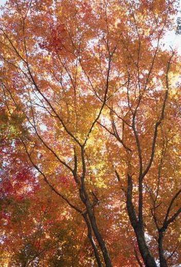 Autumn Foliage : Stock Photo
