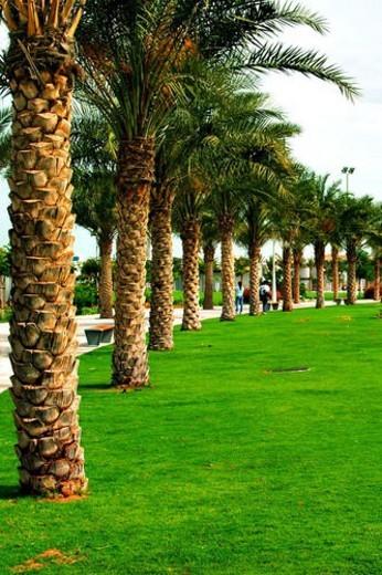 landscape, scenery, countryside, land, abu, dhabi, park : Stock Photo