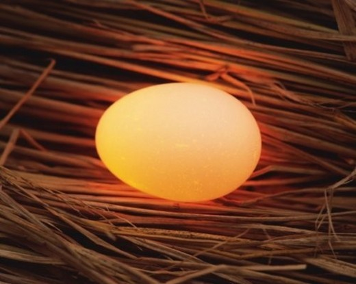 Lightened Egg in Straw, Close Up, High Angle View : Stock Photo