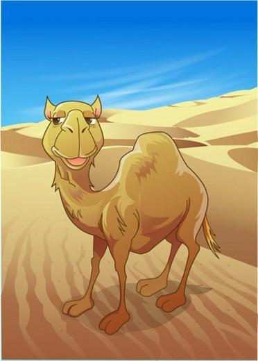 Stock Photo: 4029R-19927 animal, zoo, sand, mammalia, camel, vertebrate, desert