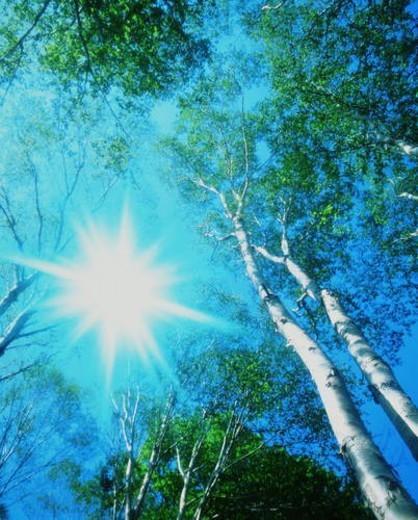Stock Photo: 4029R-202689 Sun shining through trees