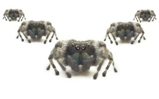 Spiders : Stock Photo