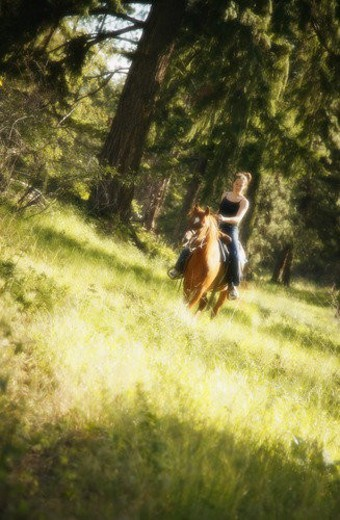 Girl riding horse : Stock Photo