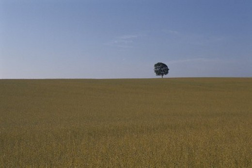 A Meadow And A Tree : Stock Photo