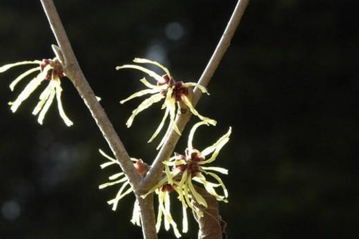 wiesen, felder, berne, blooms, botany, bright, colored : Stock Photo