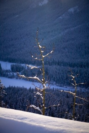 Trees on the side of a mountain, Canmore, Alberta, Canada : Stock Photo