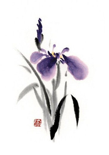 Stock Photo: 4029R-219503 Iris, ink brush painting, white background, cut out