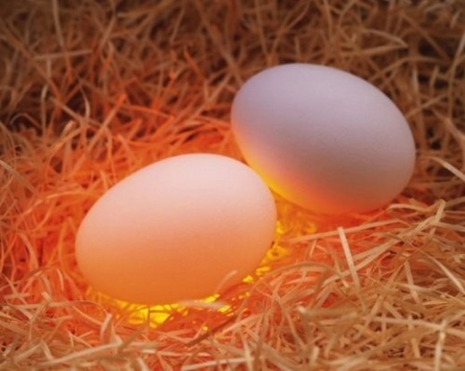 Stock Photo: 4029R-220018 Two Eggs in Straw, High Angle View, Close Up