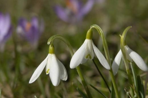 felder, wiesen, bells, berne, blooms, blumenrfarben, botany : Stock Photo