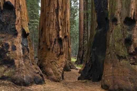 Sequoia National Park, California, USA : Stock Photo