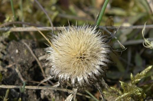 wiesen, stich, spitzig, felder, berne, blooms, blumenrfarben : Stock Photo