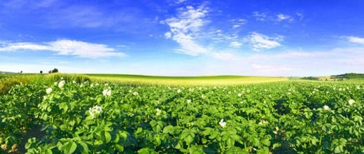 green, alfred, field, day, blue, acre : Stock Photo