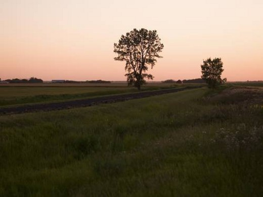 Trees in a field, Manitoba, Canada : Stock Photo