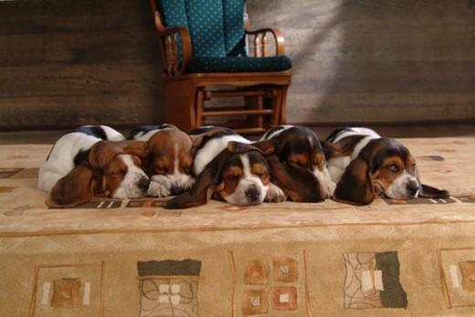 Mammal, pets, animals, animal, pet dog, mammals, pet : Stock Photo