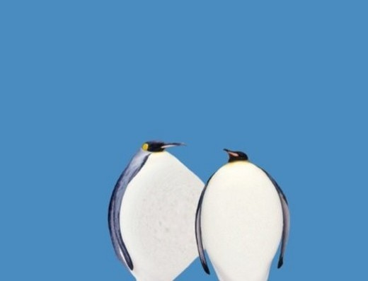 Two Fat Penguins, Front View, CG, Copy Space : Stock Photo