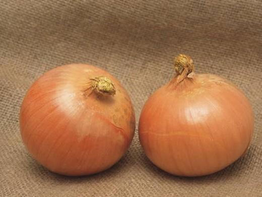 Stock Photo: 4029R-245473 Onions