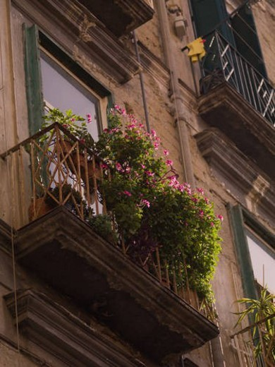 Stock Photo: 4029R-25221 Balcony with flowers in Naples