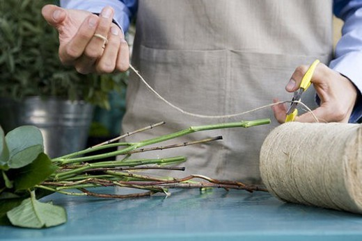 Stock Photo: 4029R-252735 Male florist creating a bouquet of flowers, cutting the twine