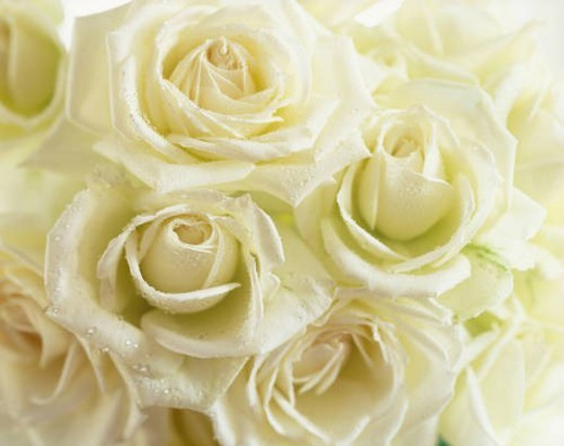 White roses : Stock Photo