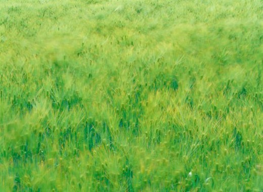 nature, grass, field, landscape, scenery, plant : Stock Photo