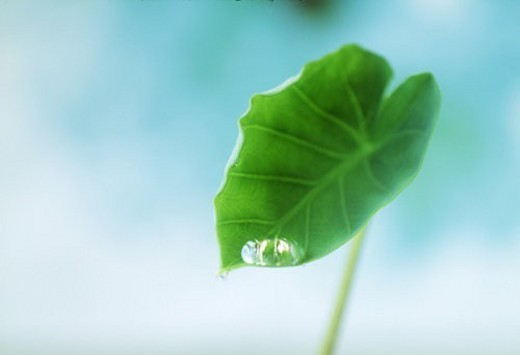 Close-up of a leaf with water droplet : Stock Photo