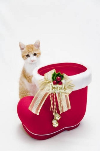 Stock Photo: 4029R-264545 Kitten next to a Christmas boot