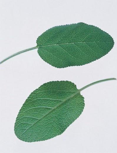 Medicinal Herb, Herb Tea, Indoor, Alternative Medicine, Herbal : Stock Photo