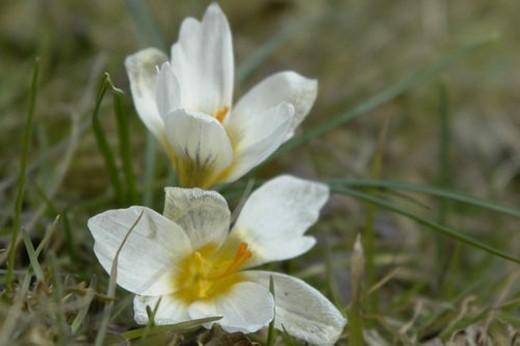 wiesen, felder, berne, blooms, blumenrfarben, botany, colored : Stock Photo