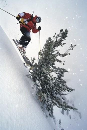 Jump, People, Tree, Air, Snow, Feeling : Stock Photo
