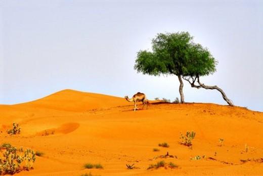 Stock Photo: 4029R-271106 landscape, scenery, countryside, land, desert, sand, tree